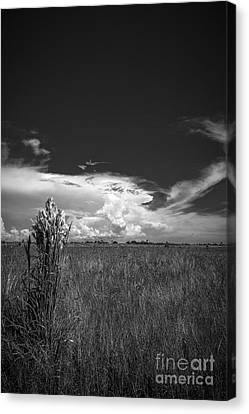 Sea Weed Canvas Print - Florida Flat Land by Marvin Spates