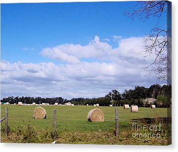 Canvas Print featuring the photograph Florida Hay Rolls by D Hackett