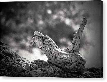 Canvas Print featuring the photograph Florida Keys Driftwood by Bradley R Youngberg
