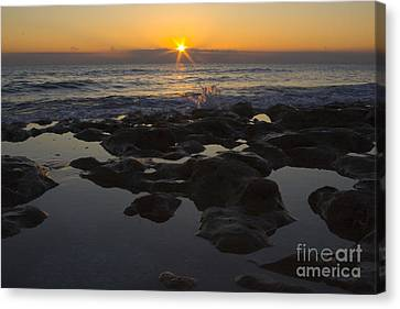 Florida Morning Starlight Canvas Print by Darleen Stry