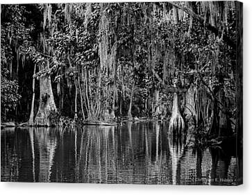 Florida Naturally 2 - Bw Canvas Print