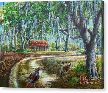 Florida Osceola Turkeys - Evening Shadows Canvas Print by Daniel Butler