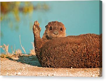 Florida Otter Canvas Print by Davids Digits