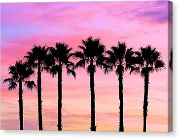 Florida Palm Trees Canvas Print by Elizabeth Budd