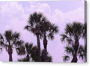 Florida Palms Canvas Print by John Wartman