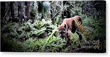 Florida Panther Canvas Print by David Francey