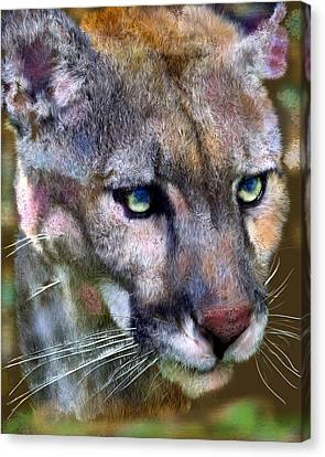 Florida Panther Canvas Print by Frederick Kenney