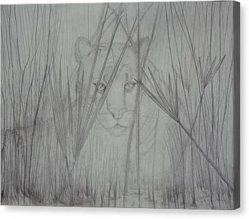 Florida Panther- Watching Canvas Print by PJ Jackson