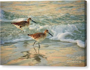 Florida Sandpiper Dawn Canvas Print by Henry Kowalski