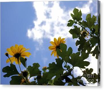 Canvas Print featuring the photograph Florida Sunshine1 by Megan Dirsa-DuBois