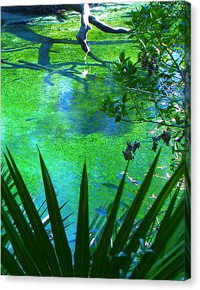 Florida Swamp With Driftwood Canvas Print by Jp Grace