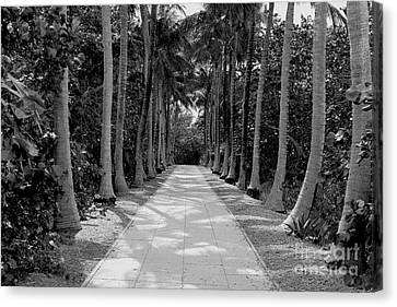 Miami Canvas Print - Florida Walkway Black And White by Carey Chen