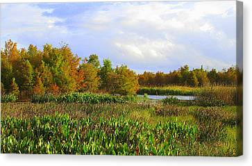 Florida Wetlands August Canvas Print by David Mckinney