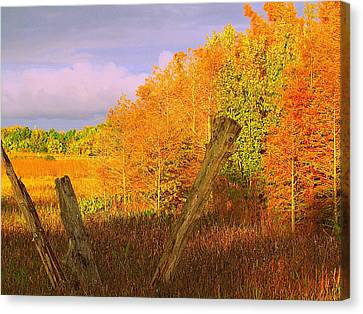 Florida Wetlands  Canvas Print by David Mckinney