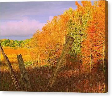 Florida Wetlands  Canvas Print