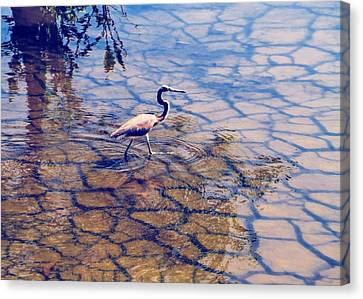 Florida Wetlands Wading Heron Canvas Print by David Mckinney