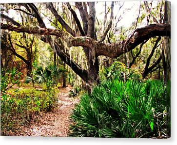 Florida Woods Canvas Print