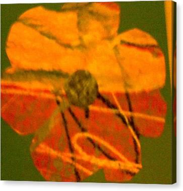 Flower 1 Canvas Print by Dorothy Rafferty