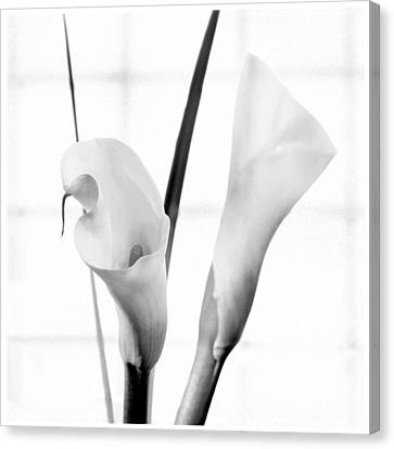 Calla Lily 2 Canvas Print by Mike McGlothlen