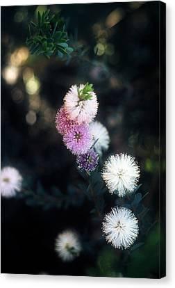 Flower 47 Canvas Print