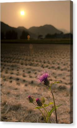 Flower And Field Canvas Print by Aaron Bedell