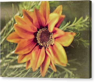 Flower Beauty I Canvas Print by Marco Oliveira