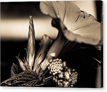 Flower Beauty II Canvas Print by Marco Oliveira