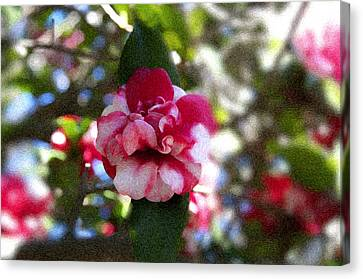 Flower Canvas Print by Bill Howard