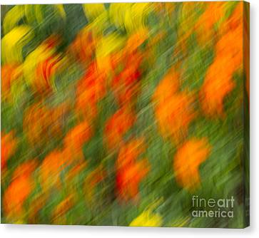 Canvas Print featuring the photograph Flower Blur by Dale Nelson