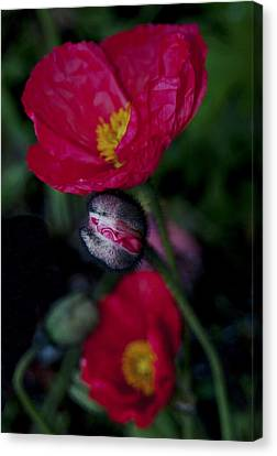 Canvas Print featuring the photograph Flower Bud by Haleh Mahbod