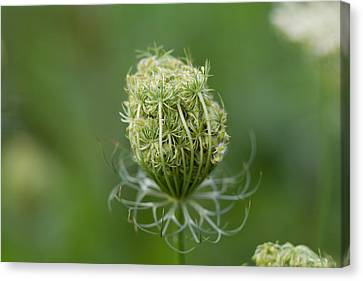 Canvas Print featuring the photograph Flower Bud by John Hoey