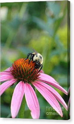 Flower Bumble Bee Canvas Print by Jt PhotoDesign