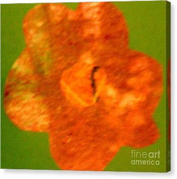 Flower Canvas Print by Dorothy Rafferty