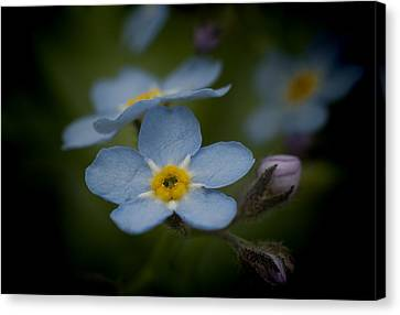 Flower Dream Iv Canvas Print by Celso Bressan