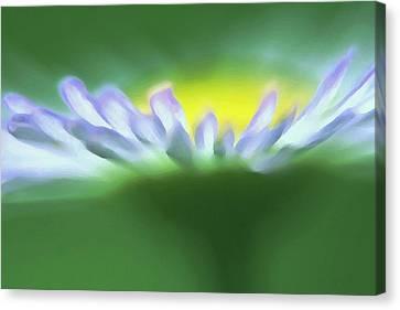 Flower Effect Canvas Print by Rachelle Johnston