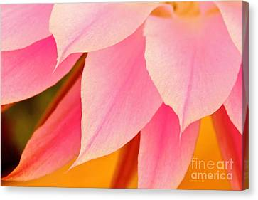 Flower Feathers Canvas Print