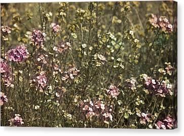Flower Field Canvas Print by Svetlana Sewell