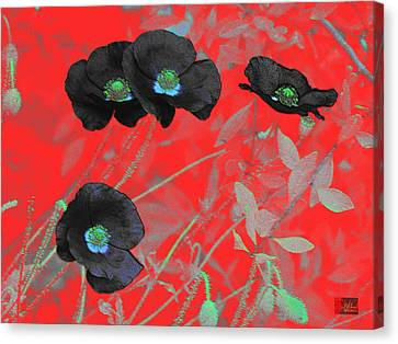 Flower Garden -  Four Black Poppies On Red Canvas Print by Douglas MooreZart