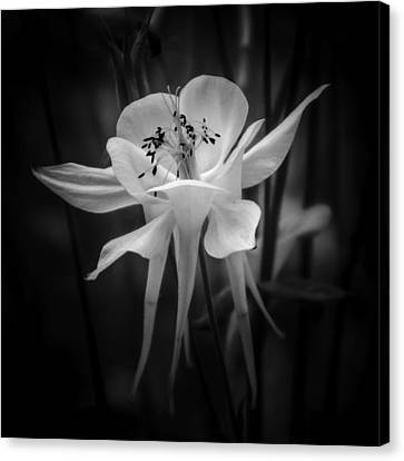 Flower In Black And White 1 Canvas Print