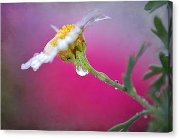 Flower In Purple Canvas Print by Guido Montanes Castillo