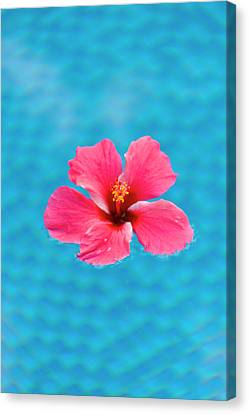 Flower In The Water For Decoration Canvas Print by Keren Su