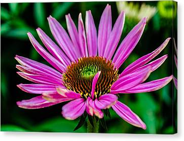 Flower Macro 3 Canvas Print