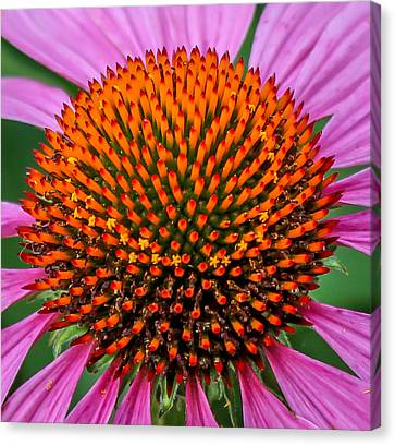 Canvas Print featuring the photograph Flower Macro  by Trace Kittrell