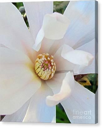 Flower Magnolia White Canvas Print by Joyce Woodhouse