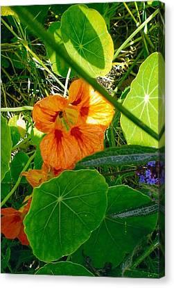 Flower Medley Canvas Print