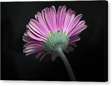 Canvas Print featuring the photograph Flower by Nick Mares