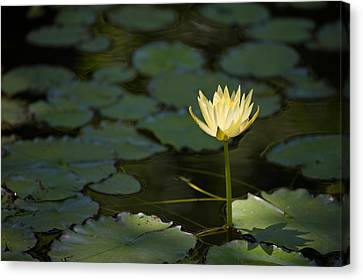 Flower Of Lights Canvas Print