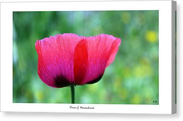 Flower Of Remembrance Canvas Print