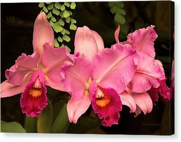 Flower - Orchid -  Cattleya - Magenta Splendor Canvas Print by Mike Savad