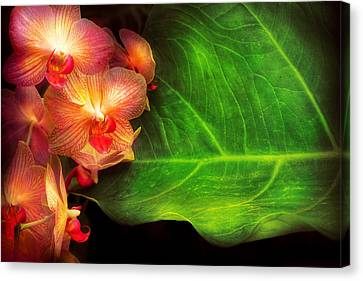 Flower - Orchid - Phalaenopsis Orchids At Rest Canvas Print by Mike Savad